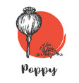 seeds and nuts set vintage hand drawing poppy vector image vector image