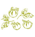 set of apples and leaves vector image