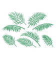 set of green isolated palm leaves vector image vector image