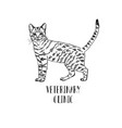fluffy cat hand-drawn logo for veterinary clinic vector image
