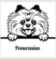 pomeranian - peeking dogs - - breed face head vector image vector image