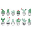set isolated cactus in pots scandinavian style vector image