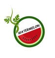 watermelon fruit icons flat style vector image vector image