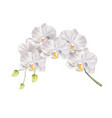 3d white orchid flower realistic design vector image