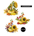 bouquets of autumn leaves fruits vector image