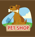 dog sign for petshop mascot vector image vector image