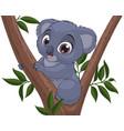 funny little koala vector image vector image