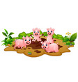 funny pigs playing in the mud vector image vector image