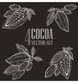Hand painted cocoa botany set vector image