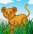 a cub in nature vector image