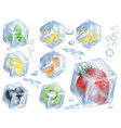 fruits berries and herb in ice vector image vector image