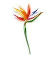 strelizia reginae realistic flower in 3d vector image vector image