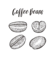 Coffee bean seed natural organic caffeine fruit vector image vector image
