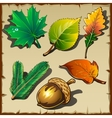 Set of leaves from different trees six icons vector image