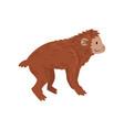 ape monkey animal progress evolutionary process vector image vector image