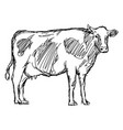 cow sketch doodle hand drawn vector image