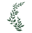 laurel branches icon vector image