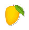 mango sweet fruit isolated fruit on white vector image