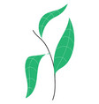 plant with leaves hand drawn design on white vector image vector image