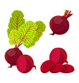 purple beetroot whole half and slices isolated on vector image vector image