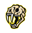 saber-toothed cat skull mascot vector image vector image