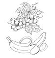 High quality original of grape and vector image