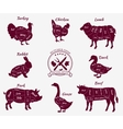 set schematic vew animals for butcher shop vector image