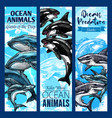 shark and whale sea predatory animal banner set vector image vector image