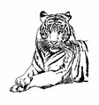 Tigers Clipart and Stock