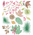 christmas and new year botanical set with pine vector image