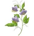 flower kobe vector image vector image