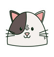 cute cat white and brown head vector image
