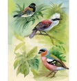 Exotic Birds on Tree Branches Watercolor vector image vector image