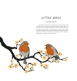 two birds sitting on a flowering branch vector image