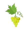 Bunch of White Wine Grape vector image vector image