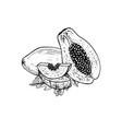 hand drawn set papaya black-white vector image