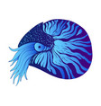 nautilus colorful decorative animal blue and dark vector image vector image