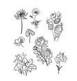 sketch design elements plant doodle flowers vector image