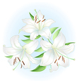 White lilies bouquet vector image vector image