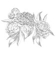 ink hand drawn of ornate peonies vector image vector image