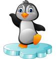 cartoon penguin standing on floe vector image vector image