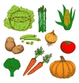 Colorful sketch of autumn fresh vegetables vector image vector image