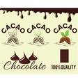 set of cacao beans and chocolate vector image