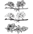 set of cherry blossoms vector image vector image