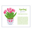 spring garden flower brochure design backgrounds vector image vector image
