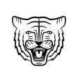 tiger face roaring tiger head vector image vector image