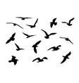Gulls vector | Price: 1 Credit (USD $1)
