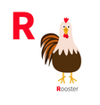 Letter R Rooster bird Cute cartoon funny character vector image