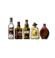 bottles alcohol distilled beverage vector image vector image