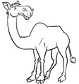 line drawing a camel vector image